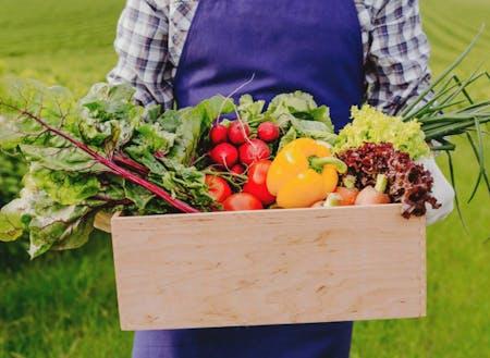 採れたて新鮮な野菜を販売します!