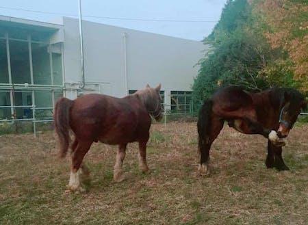 NCL奥大和ではビールや馬のプロジェクトもスタート!コワーキング事務所の隣に馬が