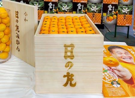 東京大田市場の初競りで、100万円で落札された日の丸みかん