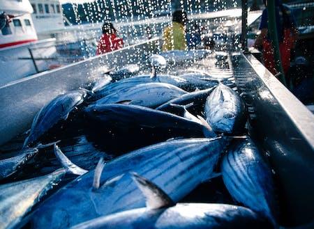 漁業水産業が主産業の宮城県気仙沼。ここからまちの経済がはじまっていると言っても過言ではありません。