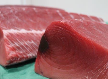 生鮮めばちまぐろの水揚げ量は日本一