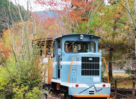 魚梁瀬地区では実際に走っていた森林鉄道が動態保存されています。乗車体験や運転体験もできますよ!