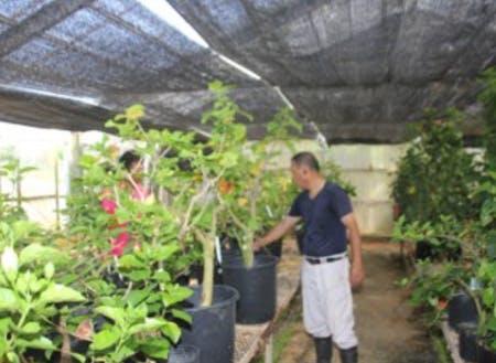 1,800品種の苗木の様子を見る所長