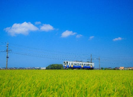 一面の田んぼとえちぜん鉄道 高い建物がなく田んぼが広がる福井の平野