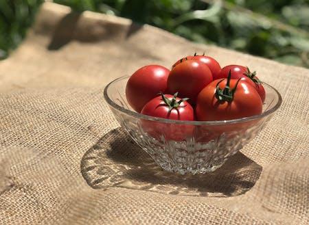 真っ赤なトマトは、下川の短い夏の風物詩