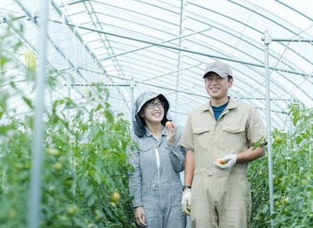 睦良田(むらた)さんご夫妻も、研修制度を利用した後、農家さんとして独立。[小さいころに食べた下川のおいしいフルーツトマトを自分の手で作りたい~ http://shimokawa-life.info/interview/interview-vol11/ ]