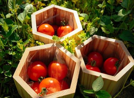 源流の水で育った絶品トマト。