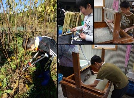 伝統作物「若山楮和紙」を刈り取りから紙漉きまでを体験する小学生