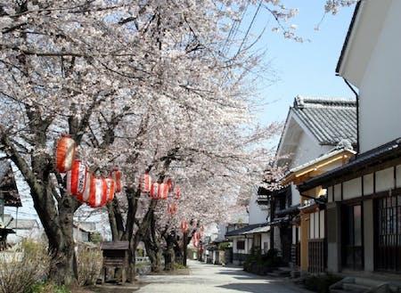 春(甘楽町)