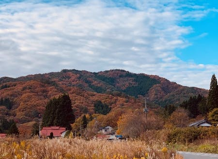 津島地区の紅葉風景