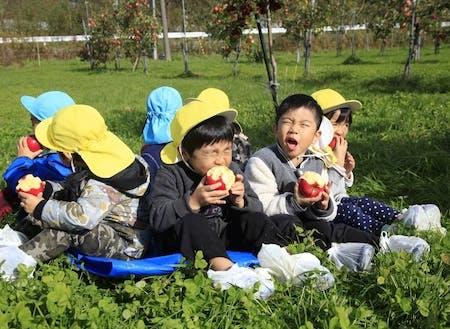 子供たちに人気のリンゴ狩り