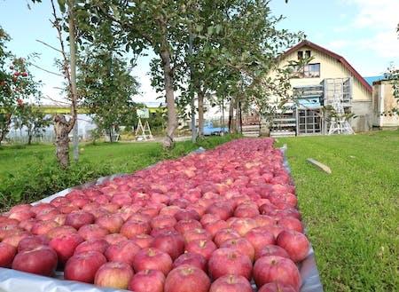 深川市は北海道でも有数の「りんご」の産地です