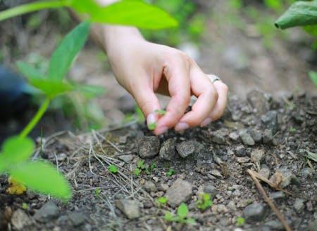 村には有機農業に取り組もうとする移住者も多い