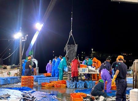 定置網漁の水揚げでは毎日新鮮な魚介が手に入ります