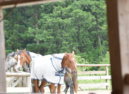 市内の馬たちの生活風景