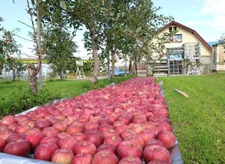 深川市は北海道でも有数のリンゴの産地です。