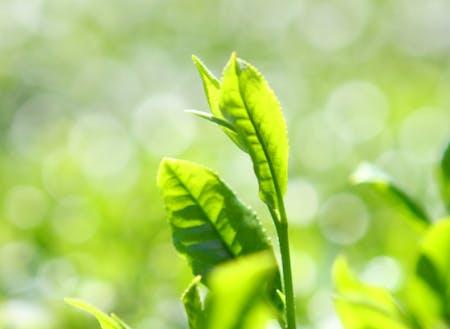 実はお茶日本一です。年中無休で温かいお茶を飲んでます。