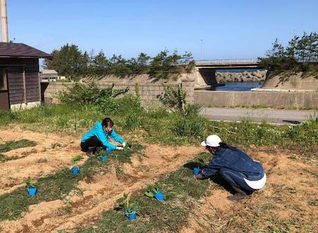 食・畑プロジェクトでは、環境に負荷をかけない農業に取り組んでいます