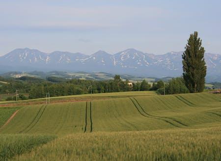 初夏の十勝岳連峰と美瑛の丘