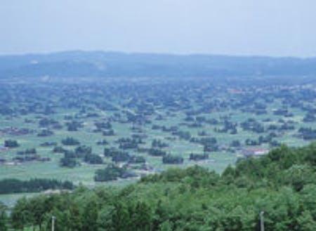 砺波平野に多く見られる散居村の風景