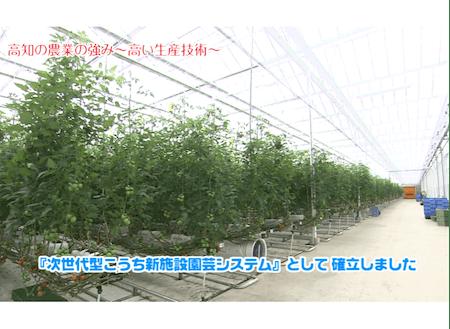 高知県にある次世代型園芸ハウス