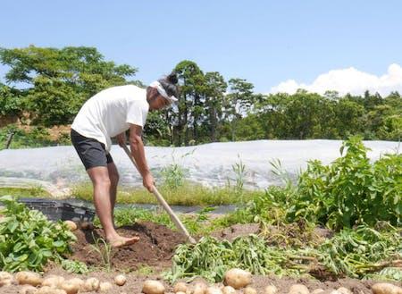 海士町のファームで農作業をする半官半X職員