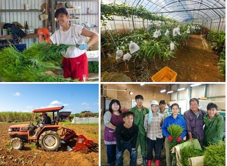 農業(花卉栽培・野菜)