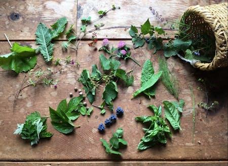 飛騨の秋の薬草たち