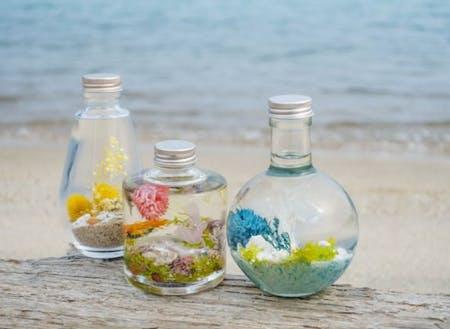 島の貝殻をつかったハーバリウム作り体験なども。