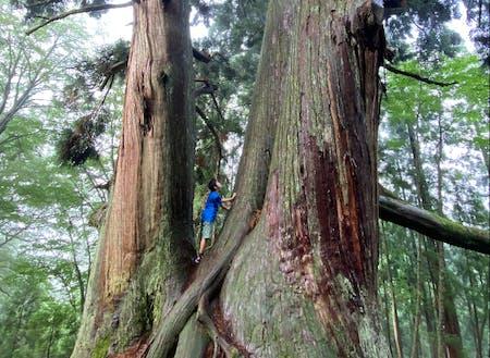 樹齢1,000年を越える木々に囲まれて◎常にいのちの繋がりを感じる環境が日常にあります