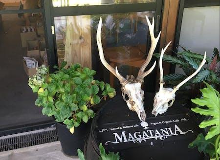 ヴィーガン&オーガニックな森カフェのMAGATANIA