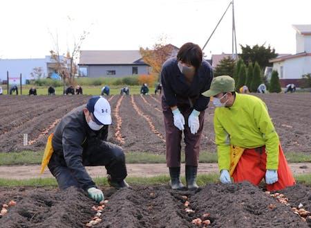 球根植え付けを行う10月は町内学生や町民によるボランティアも。