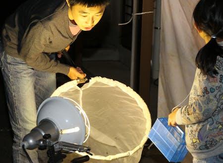 五ケ所高原での夜間昆虫採取。夏休み昆虫教室の様子。