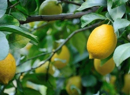 小田原の柑橘を使った商品が人気!《小田原》