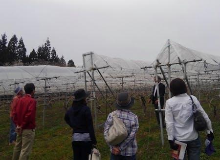ワイン用品種の垣根仕立ての畑にて。大迫町のブドウ栽培は全国的にも珍しい雨よけ栽培をしています。