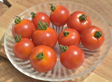 甘さたっぷり、様々な展開可能性があるトマトです