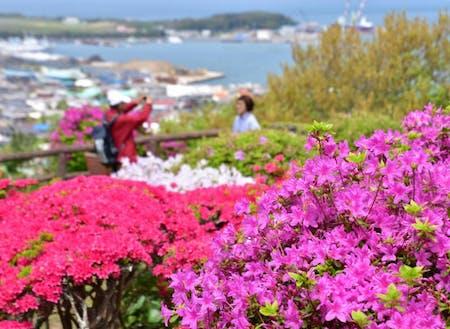 館山の自然