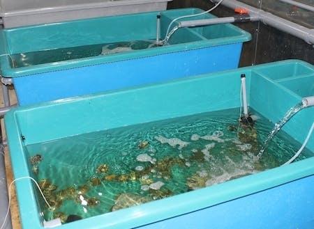 1つの水槽には200匹のアワビが元気に育っています