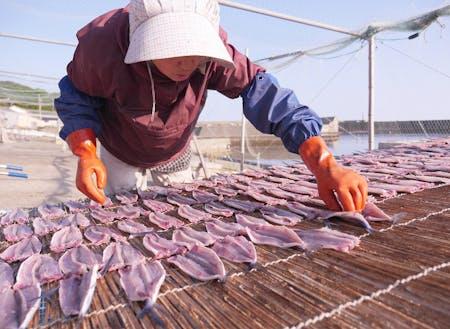 水揚げされた魚を加工品にする体験