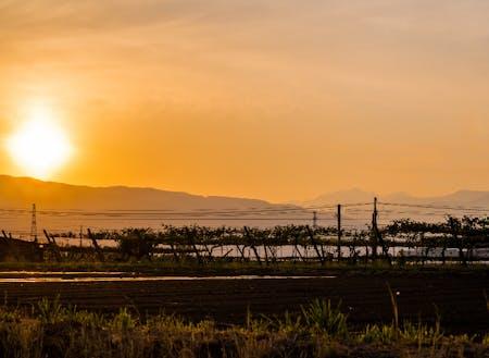 坂勘がある贄川宿から市街地に向かういつもの通り道。葡萄畑越しに沈む夕日と、北アルプスの端っこのシルエット。