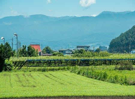 塩尻は山々に囲まれて葡萄畑があちこちに広がるなんてこない長野の田舎町。その、なんてことない日常が愛おしい