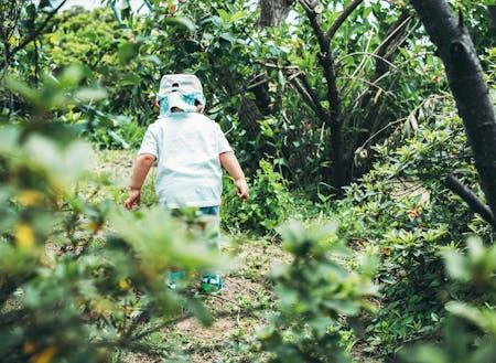 里山の畑をフィールドに食育をまじえた教育プロジェクト