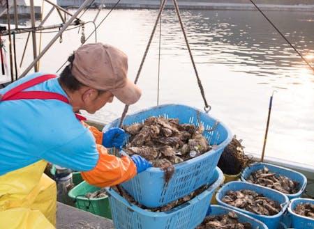 山と海に囲まれた釜石市は牡蠣・ウニ・ワカメなどの海産物が豊富です