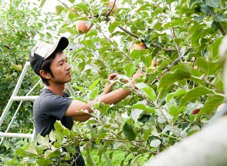 代々続くりんご農家の唯一の後継者(5代目)