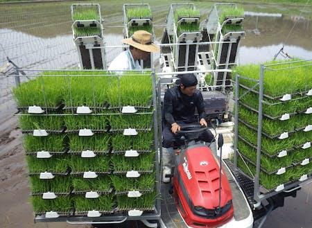 農業スクール生の田植え指導