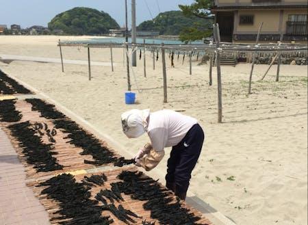 竹野の浜辺でワカメ干しをする人
