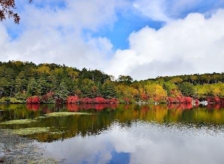 白駒池では紅葉が始まっているかも
