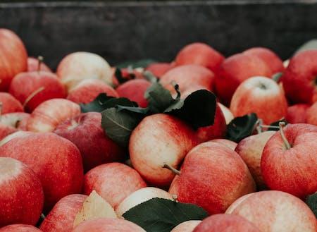 りんご農家さんにも訪問!収穫の秋は食の魅力がたくさん!