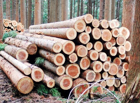 森の手入れと共に森から供給される資源
