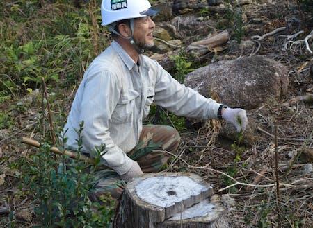 森林組合おわせさんによる林業体験(山のしごと)。